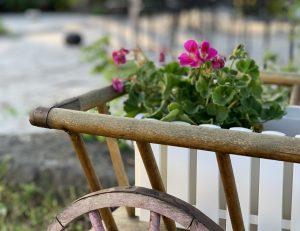 Närbild på träkärra med hjul, i kärran syns en vit blomlåda med rosa blommor och gröna blad.